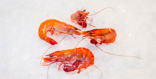 8_content_big_1120_shrimps